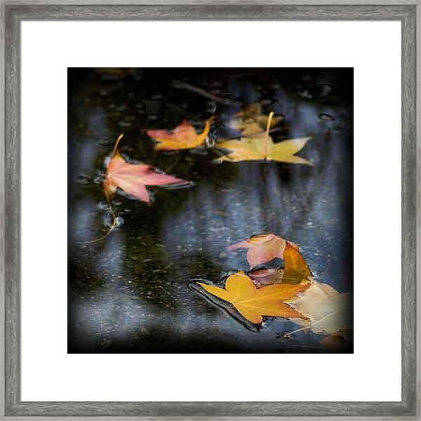 Autumn Leaves On Water Framed Print