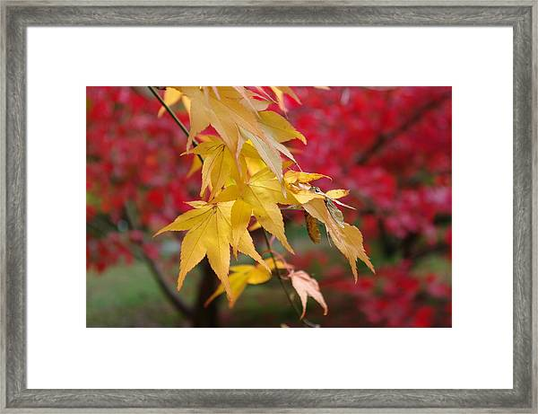 Autumn Leaves Framed Print by Tony Serzin
