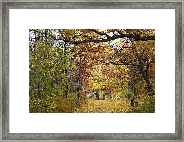 Autumn Nature Trail Framed Print