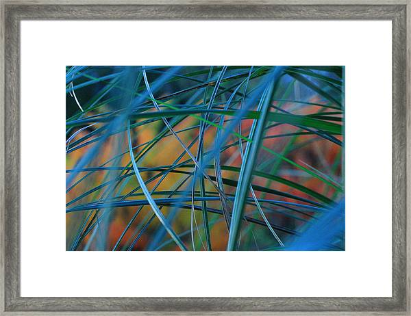 Autumn Pampas Grass Framed Print by Rebeka Dove