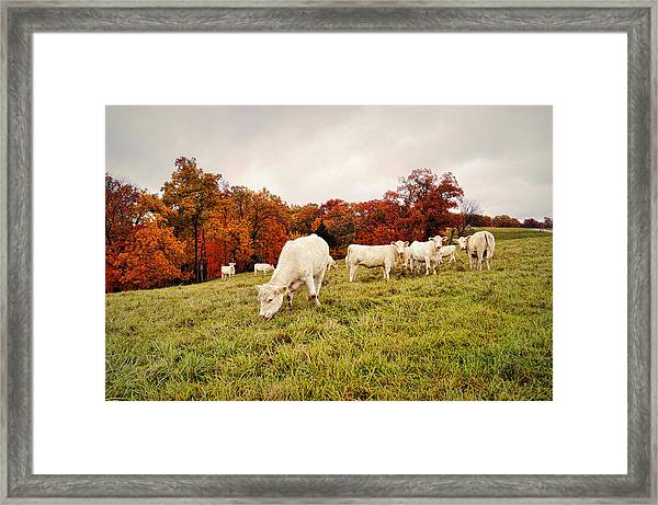 Autumn Pastures Framed Print