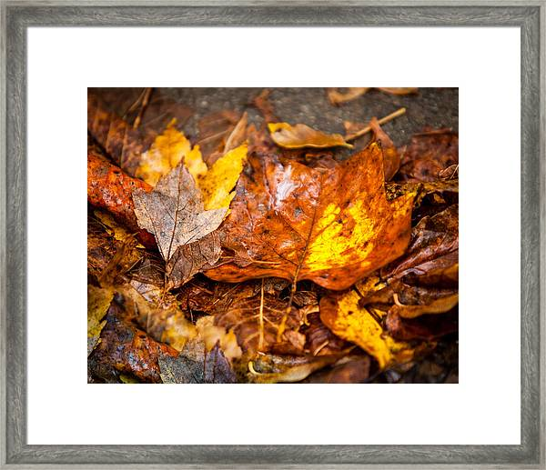 Autumn Pile Framed Print