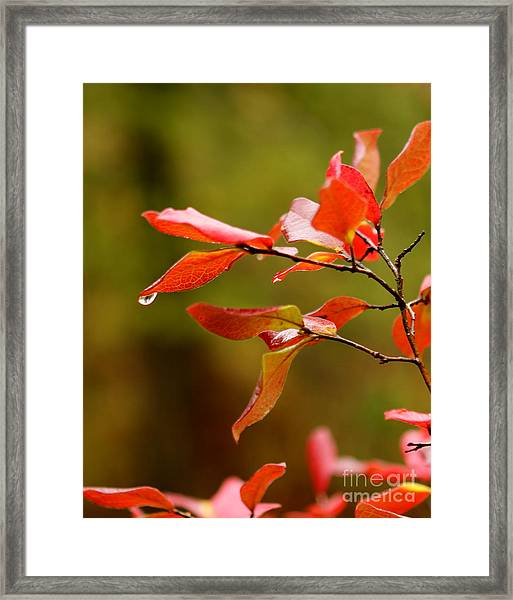 Autumn Raindrop Framed Print