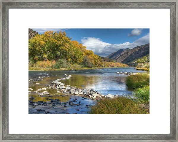 Autumn Stance Framed Print