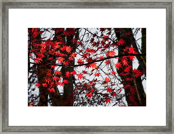 Autumn Time Framed Print
