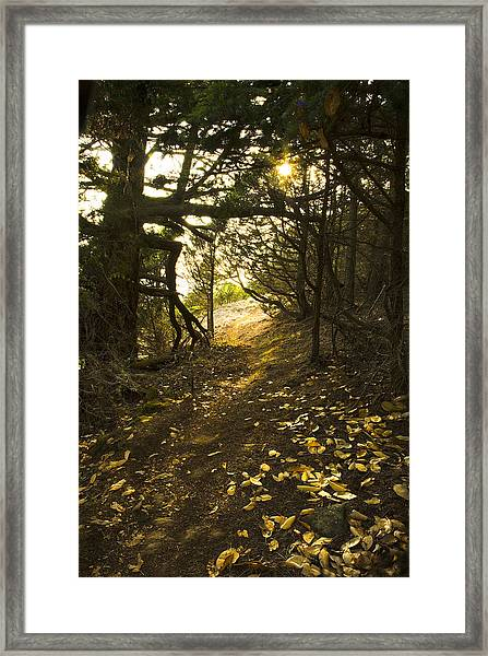Autumn Trail In Woods Framed Print
