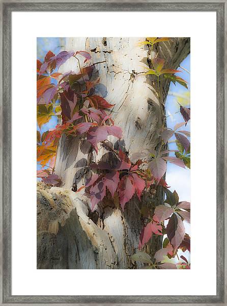Autumn Veil Framed Print