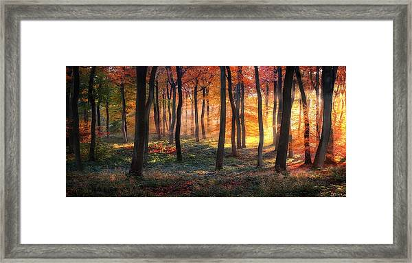 Autumn Woodland Sunrise Framed Print by