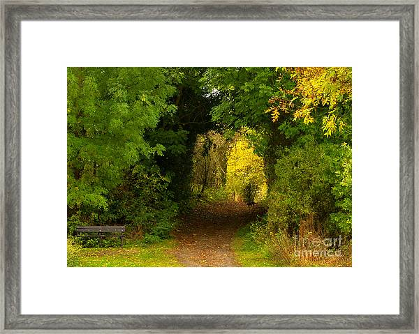 Autumn Woodland Walk Framed Print