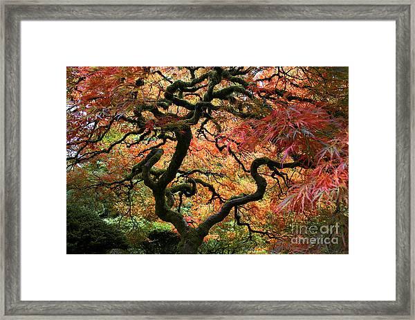 Autumn's Fire Framed Print