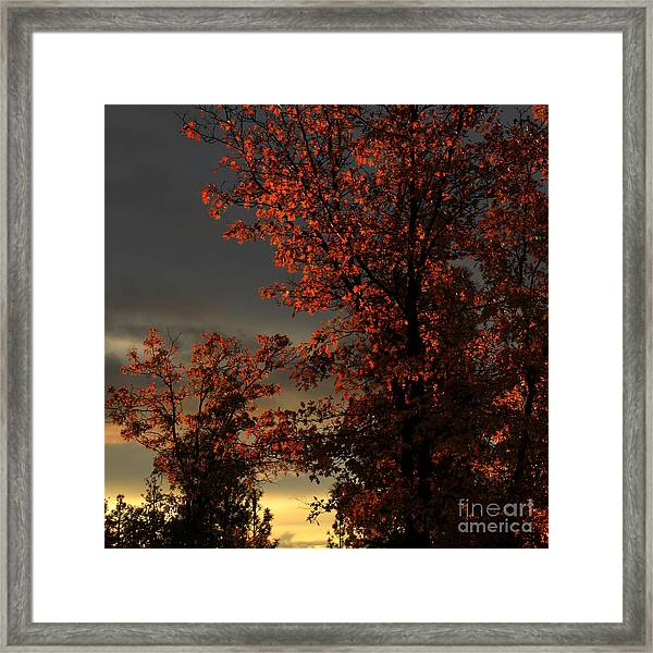 Autumn's First Light Framed Print