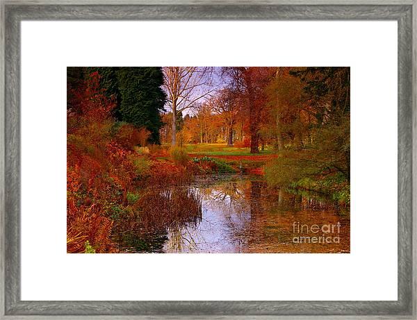 Autumn's Golden Colours Framed Print