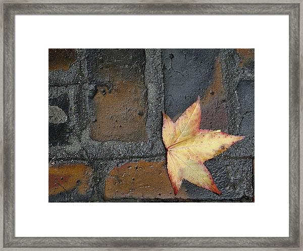 Autumn's Leaf Framed Print