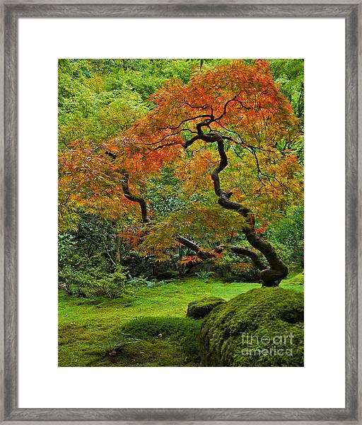 Autumn's Paintbrush Framed Print