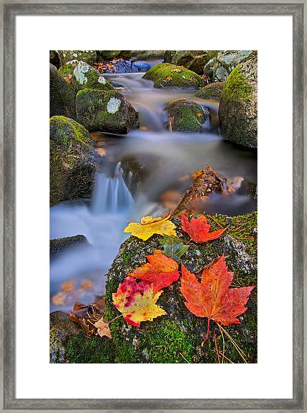 Autumn's Song Framed Print