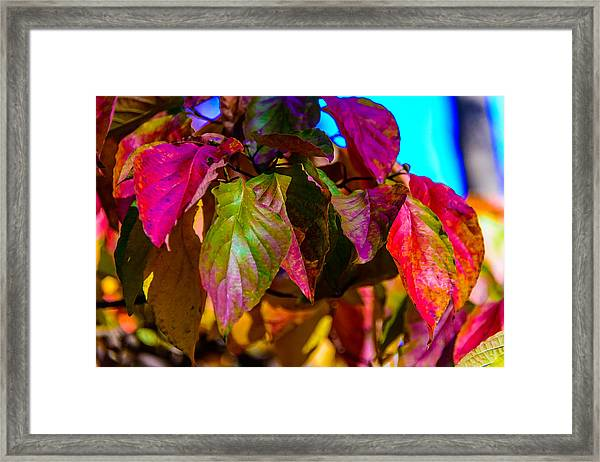 Autumns Wake Up Call Framed Print