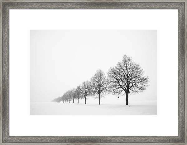 Avenue With Row Of Trees In Winter Framed Print