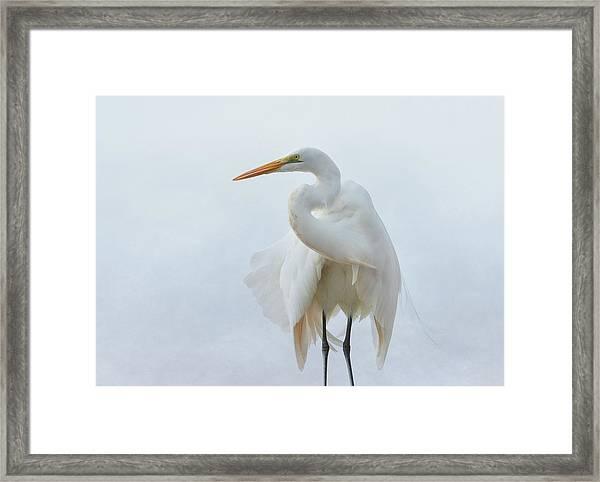 Avian Angel Framed Print