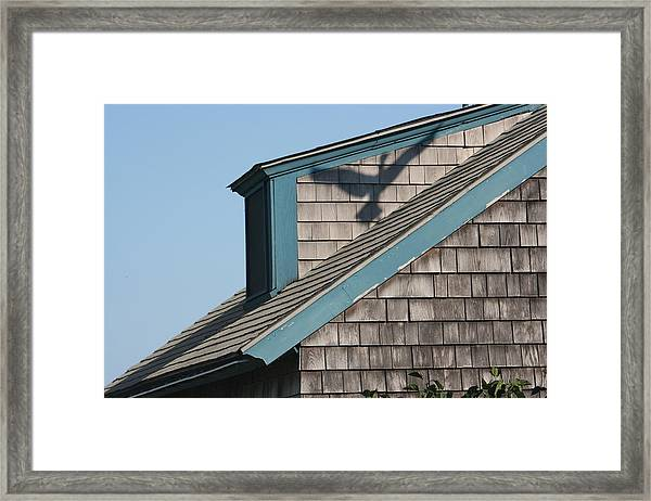 Avian Illusion Framed Print