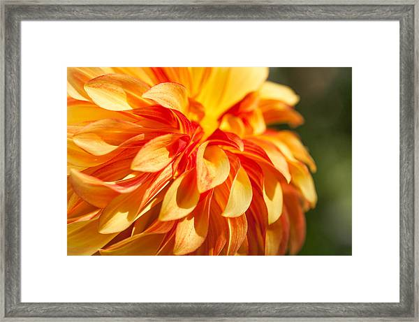 Awesome Blossom Framed Print
