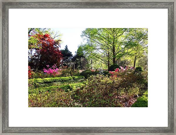 Azalea Garden Framed Print