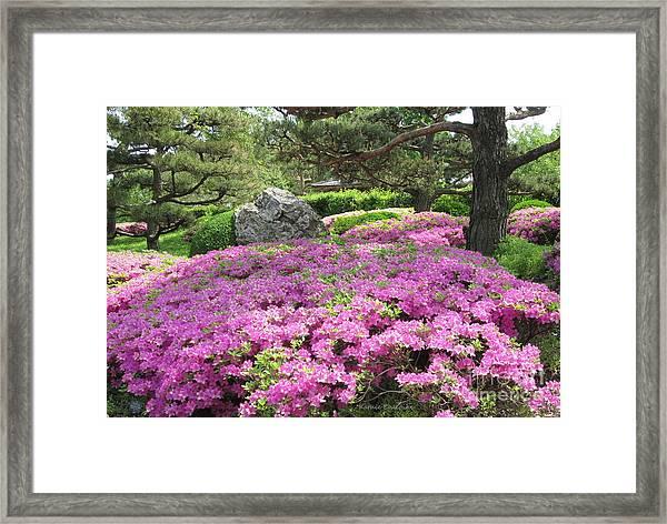 Azalea Path Framed Print