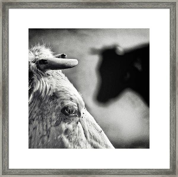 B & W Framed Print by Piet Flour