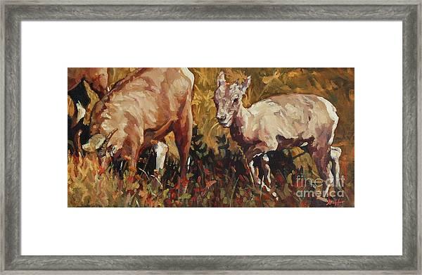 Baby Big Horn Framed Print