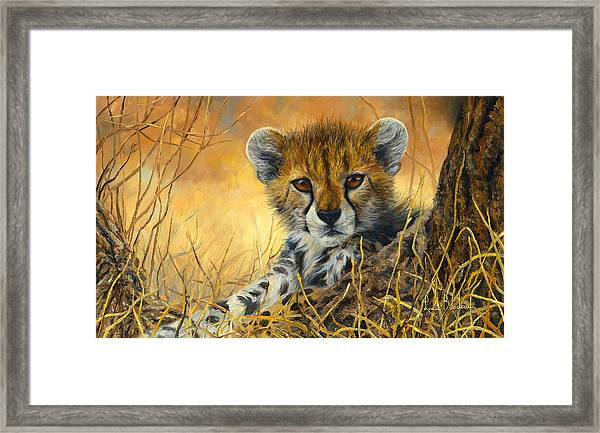 Baby Cheetah  Framed Print