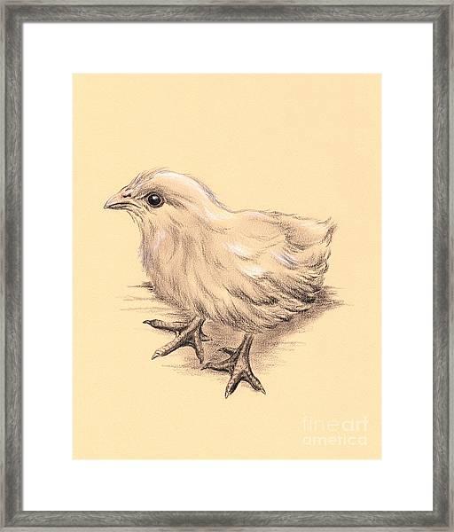 Baby Chicken Framed Print