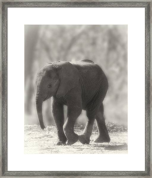Framed Print featuring the photograph Baby Elephant Sepia by Gigi Ebert