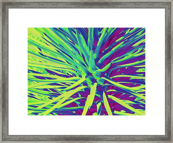 Baby Joshua Tree Framed Print by Claire Plowman