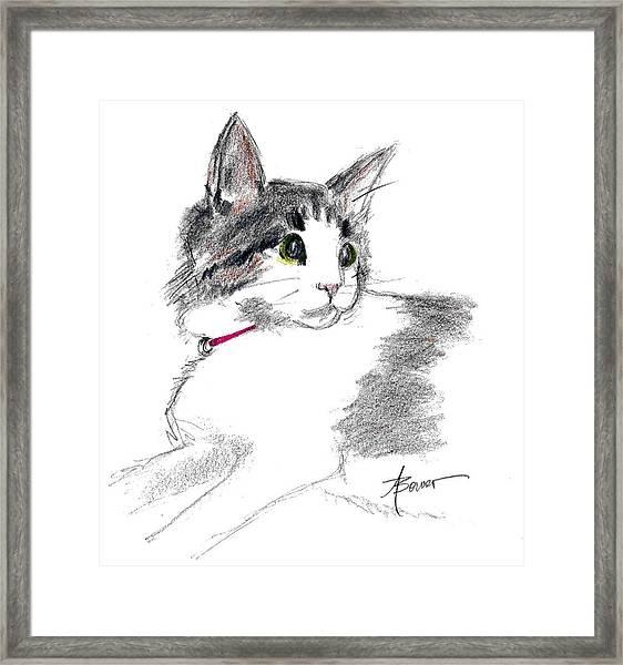 Baby Kitten Framed Print