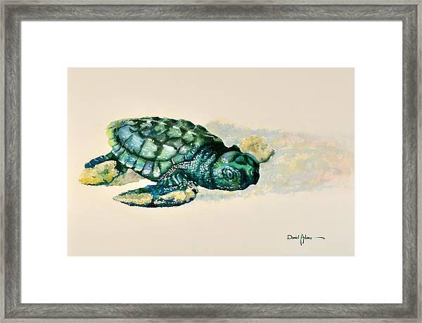 Da150 Baby Sea Turtle By Daniel Adams  Framed Print