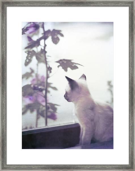 Baby Siamese Kitten Framed Print