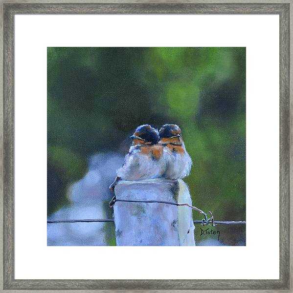 Baby Swallows On Post Framed Print