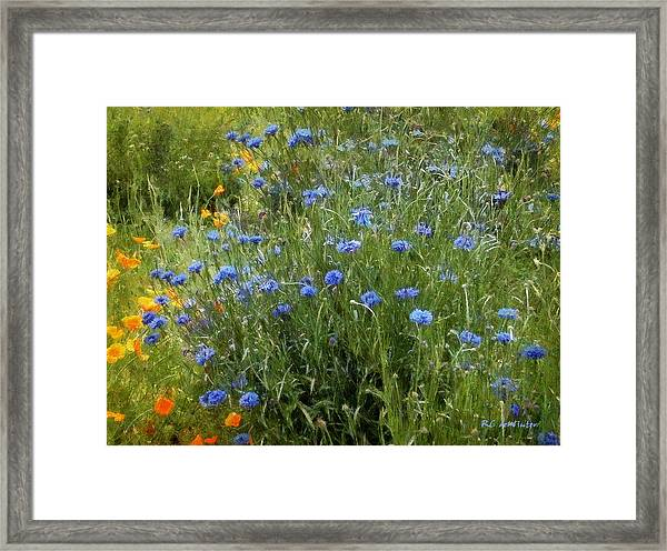 Bachelor's Meadow Framed Print