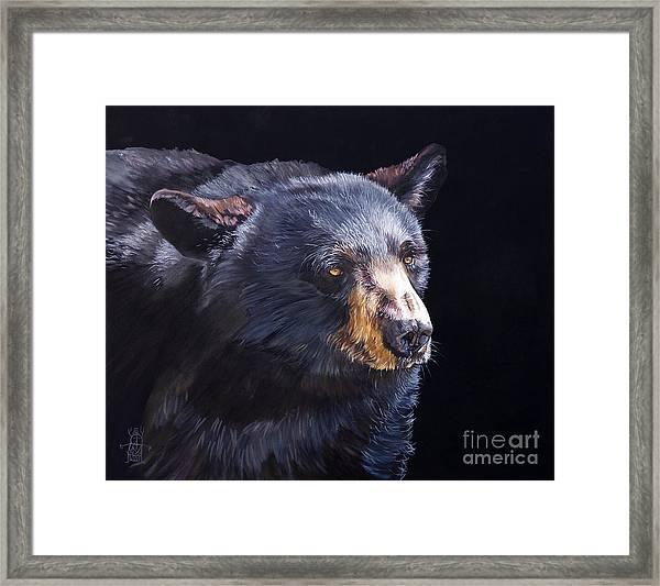 Back In Black Bear Framed Print