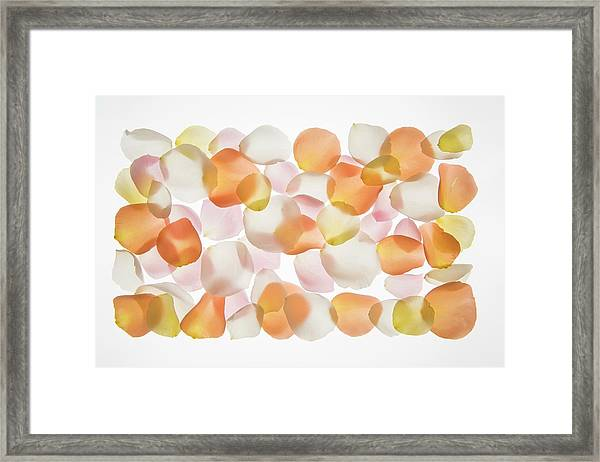 Back Lit Flower Petals Framed Print by Photostock-israel/science Photo Library