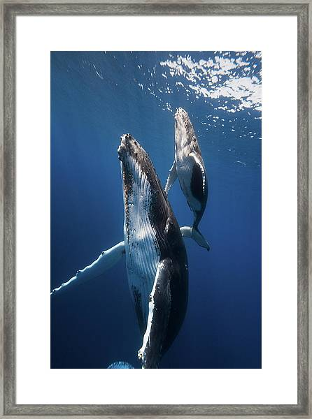 Back To The Surface Framed Print by Barathieu Gabriel