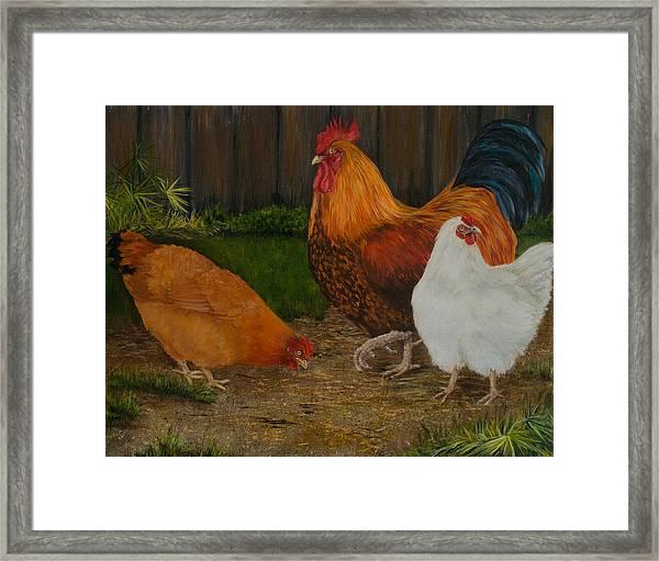 Back Yard Flock Framed Print