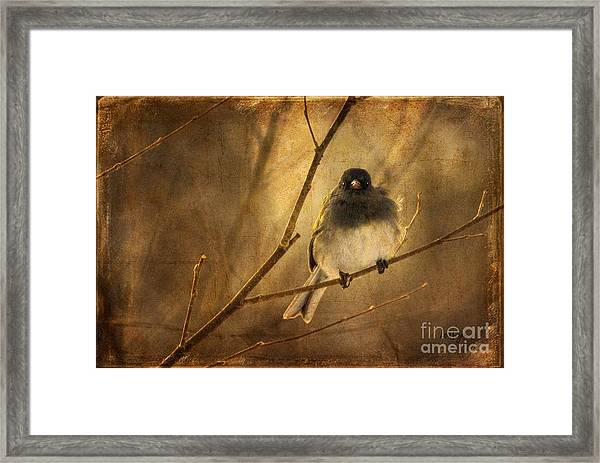 Framed Print featuring the photograph Backlit Birdie Being Buffeted  by Lois Bryan