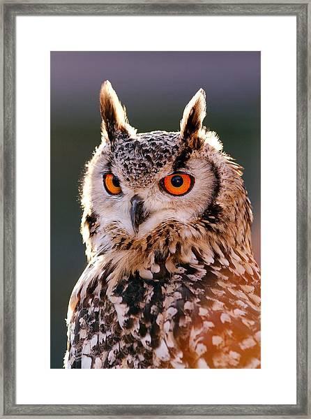 Backlit Eagle Owl Framed Print
