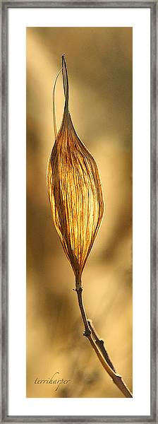 Backlit Leaf Framed Print