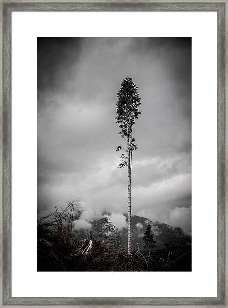 Lone Tree Landscape  Framed Print