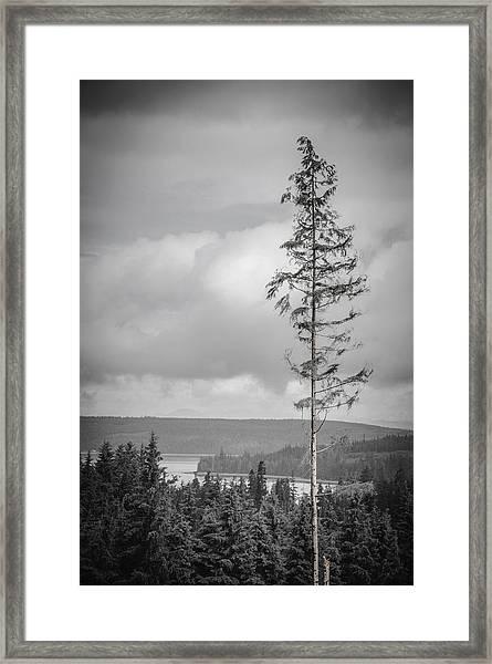 Tall Tree View Framed Print