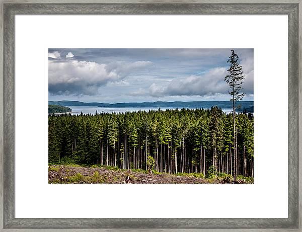 Logging Road Landscape Framed Print