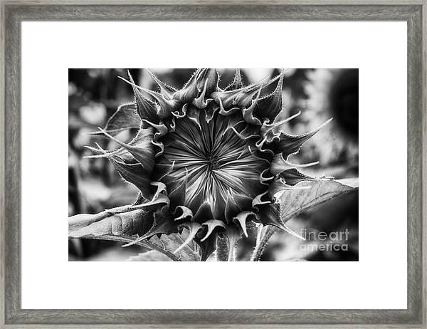 Backside Of Sunflower Framed Print