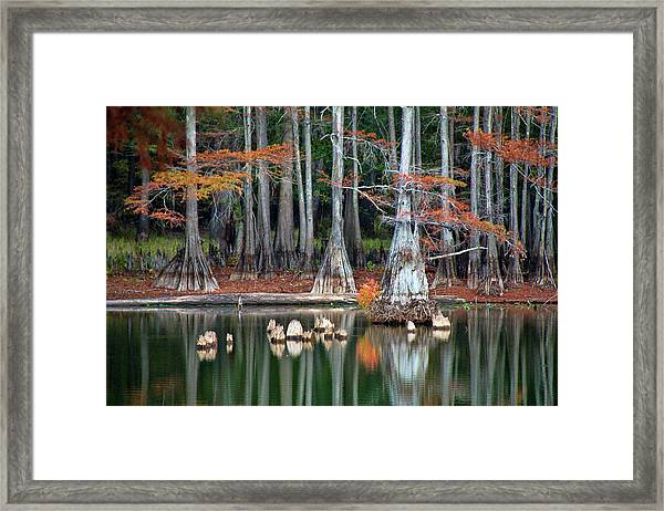 Backwaters Framed Print