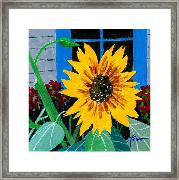 Backyard Flowers  Framed Print